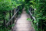 Nature Path - Pelee